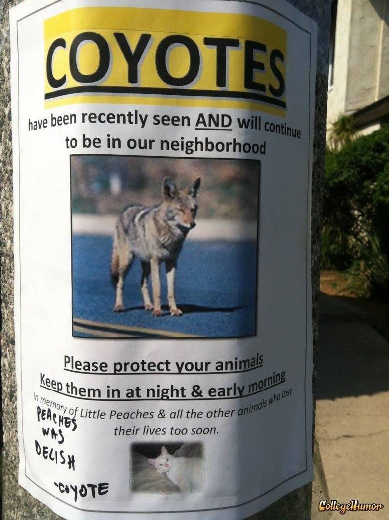 Damn Coyotes.... . ryou. , hide yo roadrunners Damn Coyotes ryou hide yo roadrunners