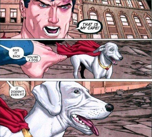 Damn it Krypto!. . krypto the Dog