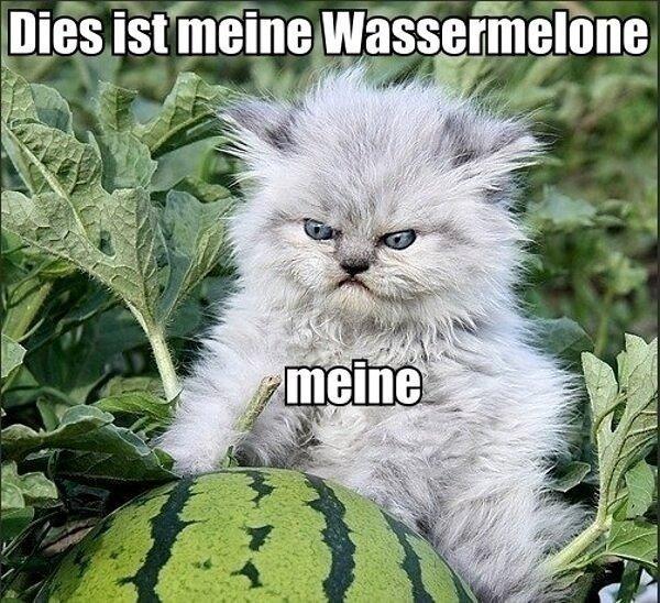 Das kitty. cats.. Heil Mein Kitler Das kitty cats Heil Mein Kitler