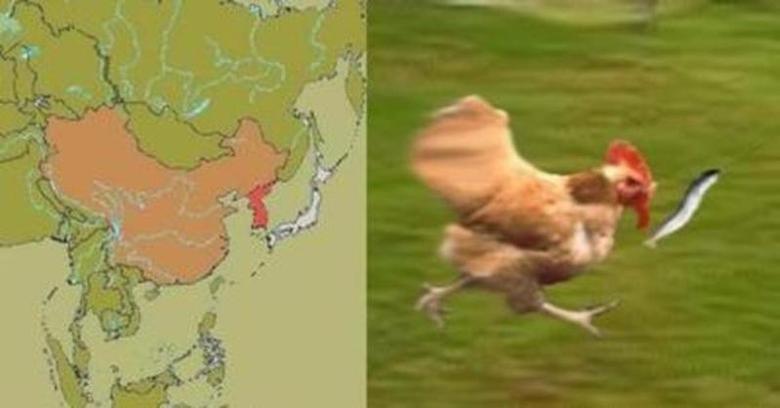 Dat chicken. . Dat chicken