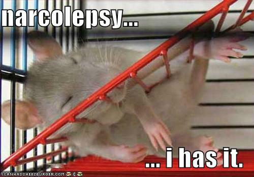 dat rat. . Rats