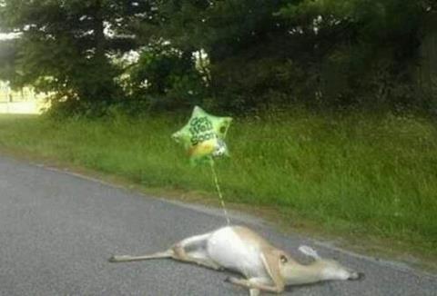 Deer lord. thats funny. Deer lord thats funny