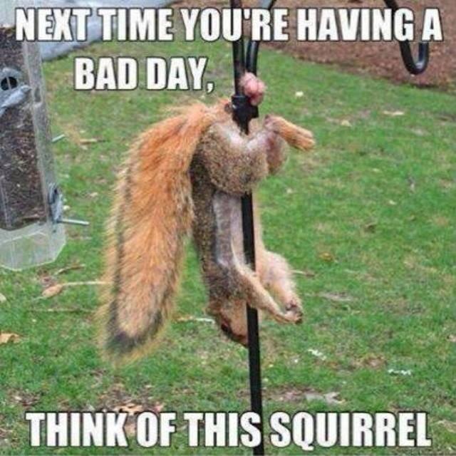 Dem nutz... ouch. Damn..... I If tre. mite try dat sum tiem Squirrel Nuts