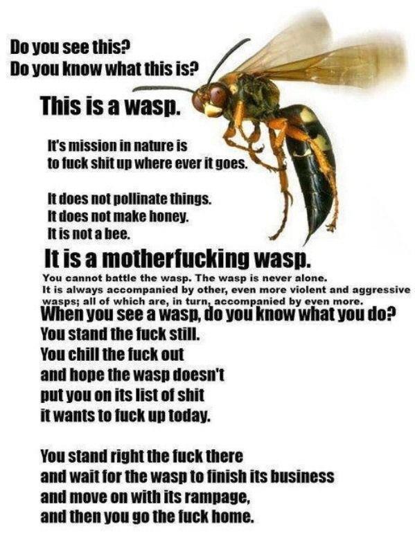 Dem Wasp. . Dem Wasp