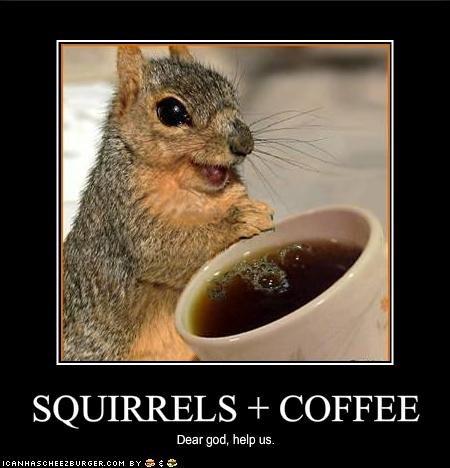 demon squirrel. . COFFEE Dear god, help us.. DO IT FAGGOT! squirrels Coffee funny