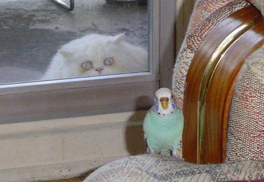 Determined Cat. .. brainssss brainssss BRAINNSSSS captcha : there..... ok.... cat