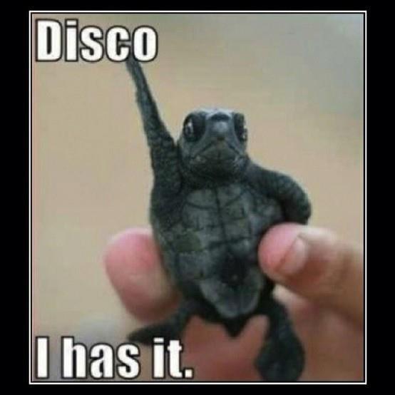 Disco. I has it. Disco I has it