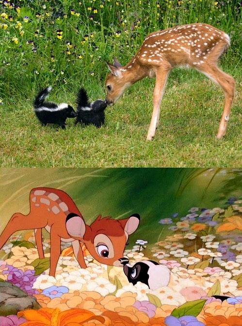 Disney in Real Life. .. Anyone? Disney in Real Life Anyone?