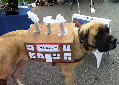 Dog Costume. . Dog Costume