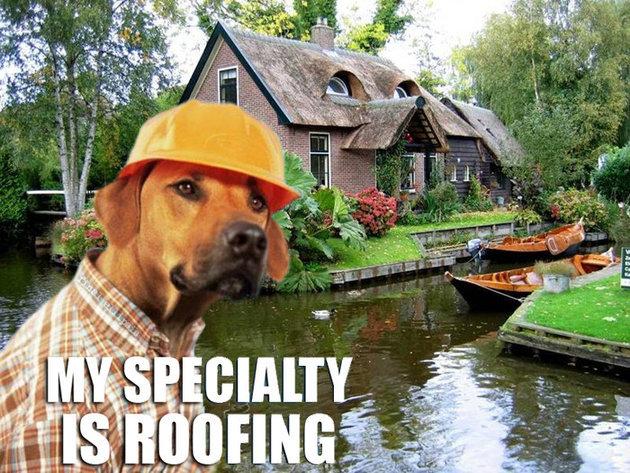 dog house. oh god lawl. dog house oh god lawl