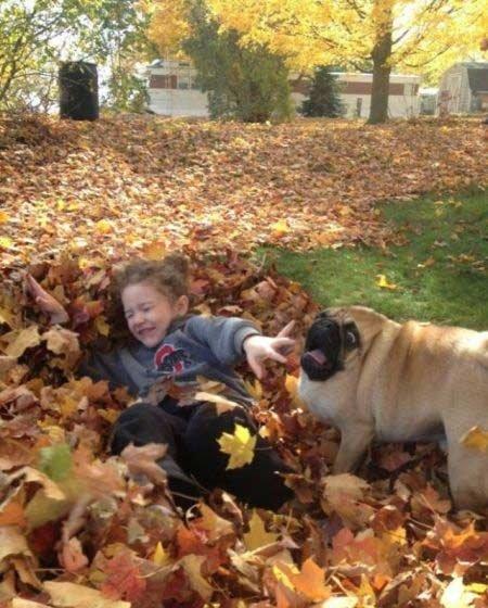 Dog, r u ok?. ermahgerd.. his neck disappeared Dog