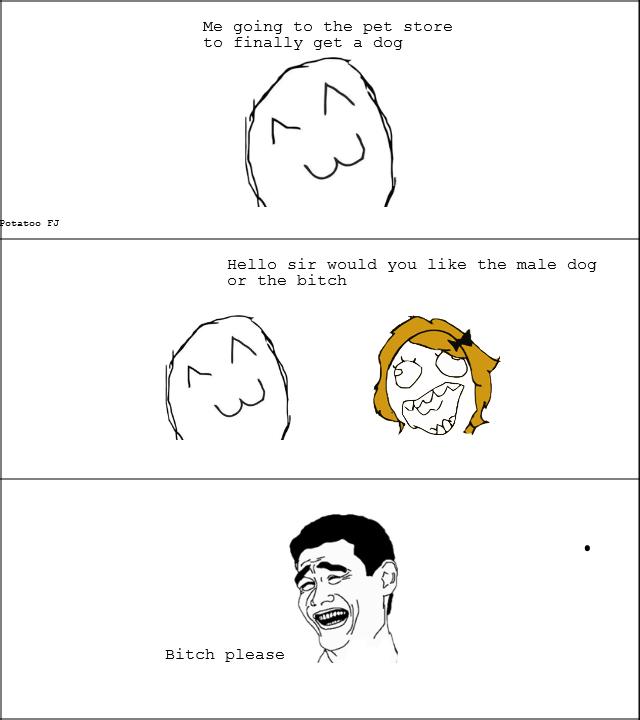 Dog Store. . Dog Store