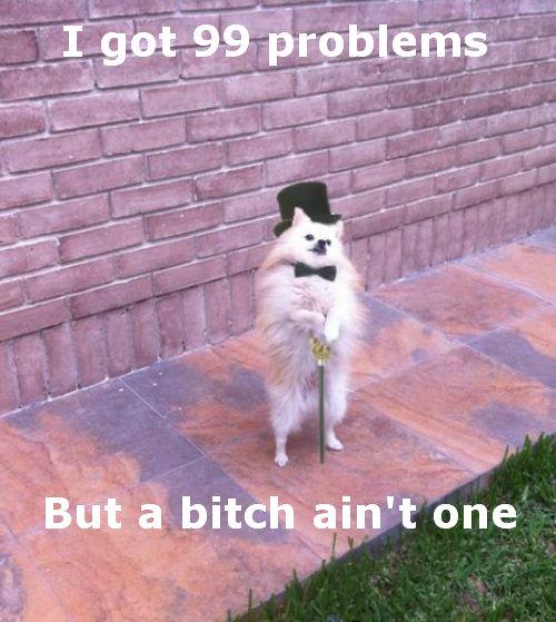Dog. Yep.. ICS; a bitch ain' t one Dog bitch problems hurr