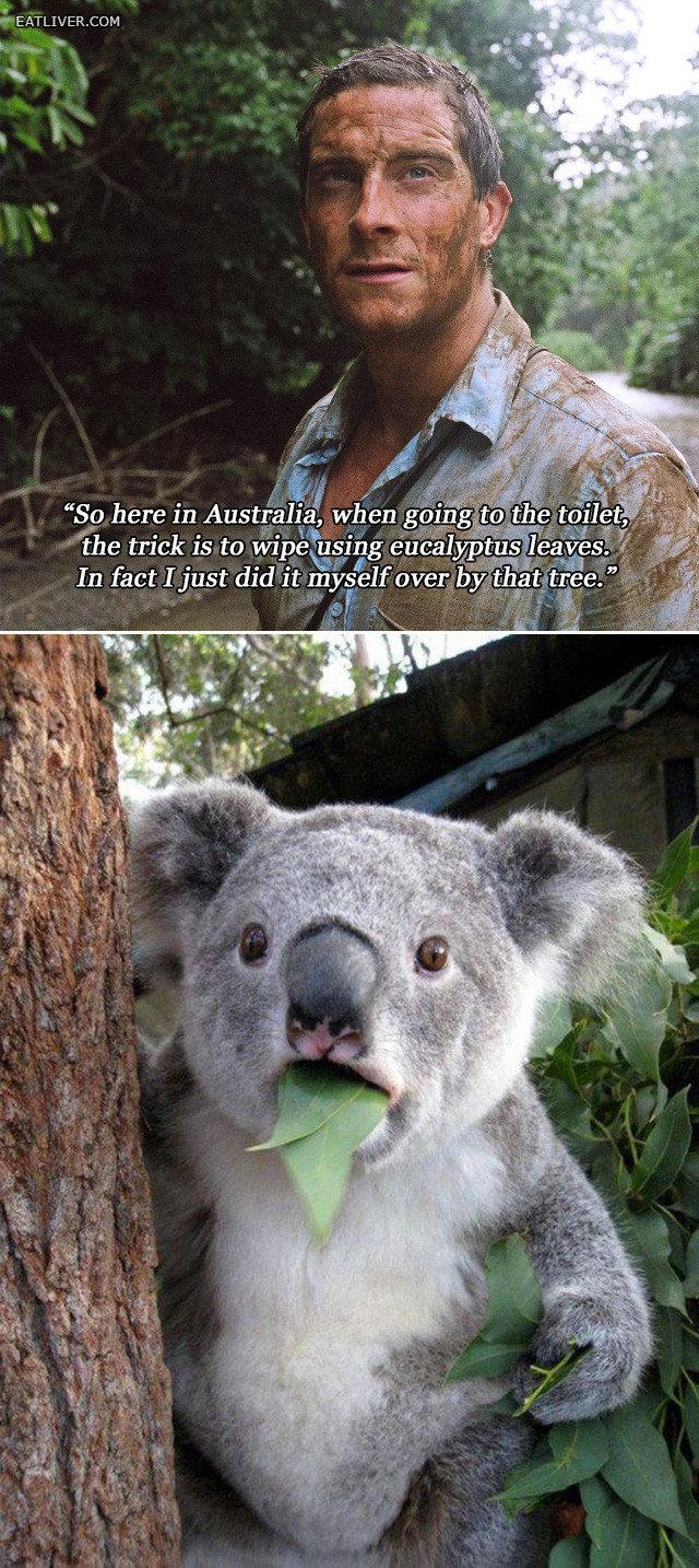 douchebag. .. oiye das wut dem drop bears gets s'are fckin land mate douchebag oiye das wut dem drop bears gets s'are fckin land mate