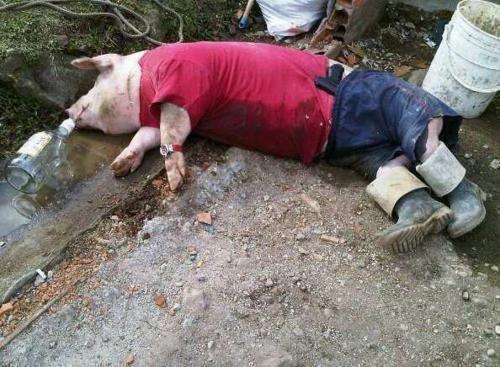 Drunk as a pig. .. rape on a stick Drunk as a pig rape on stick