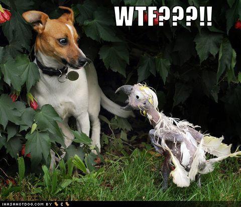 hahahaha. . hahahaha