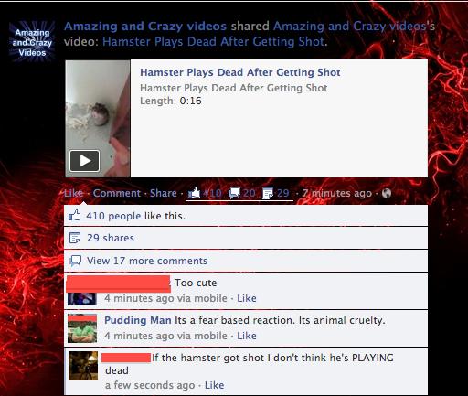 hamster shooting. . hamster shooting