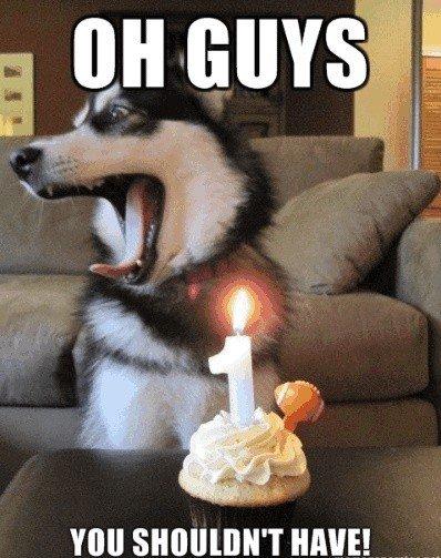 Happy Birfday. Hi. Dogs funny bored