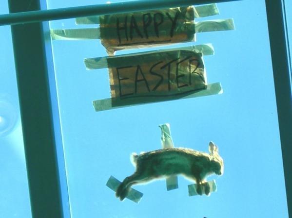 happy Easter. .. i still want my egg happy Easter i still want my egg