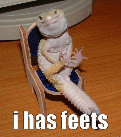 Happy Lizard Is Happy. . Happy Lizard Is