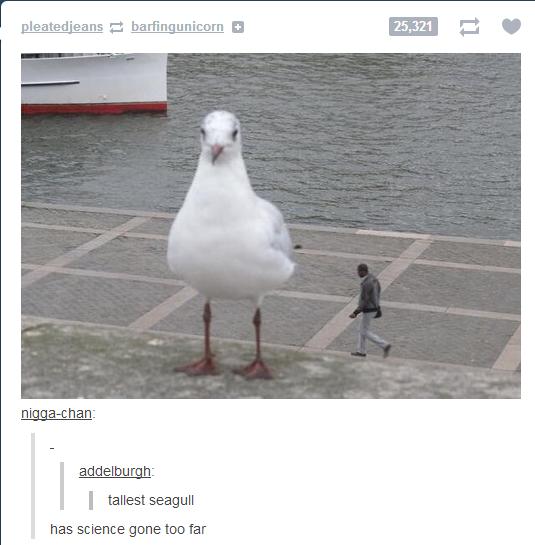 Has science gone too far?. . beated' eano L' I] I tallest seagull has science gone too far Has science gone too far? beated' eano L' I] I tallest seagull has far