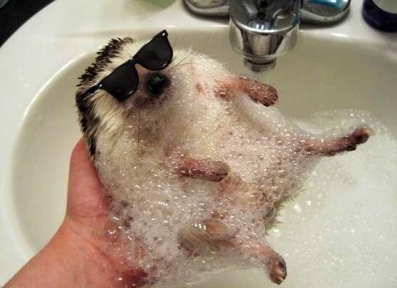 Hedgehog. . hedgehog shades deal with it bamf