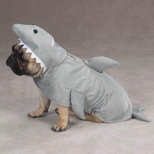 Hello? Yes sir, I r shark. . Hello? Yes sir I r shark