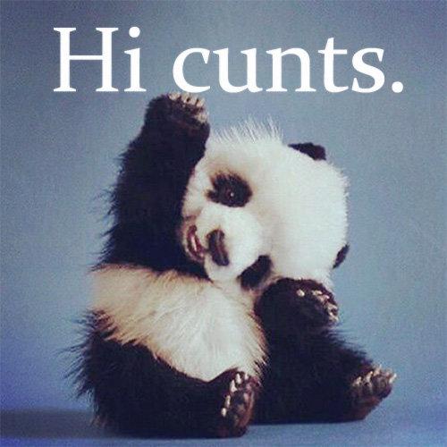 Hello.. . Panda funny hi