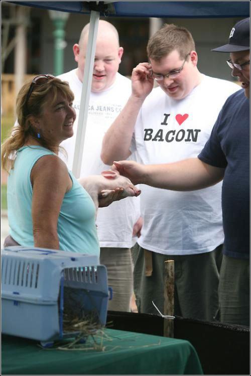Here Piggy. . Here Piggy