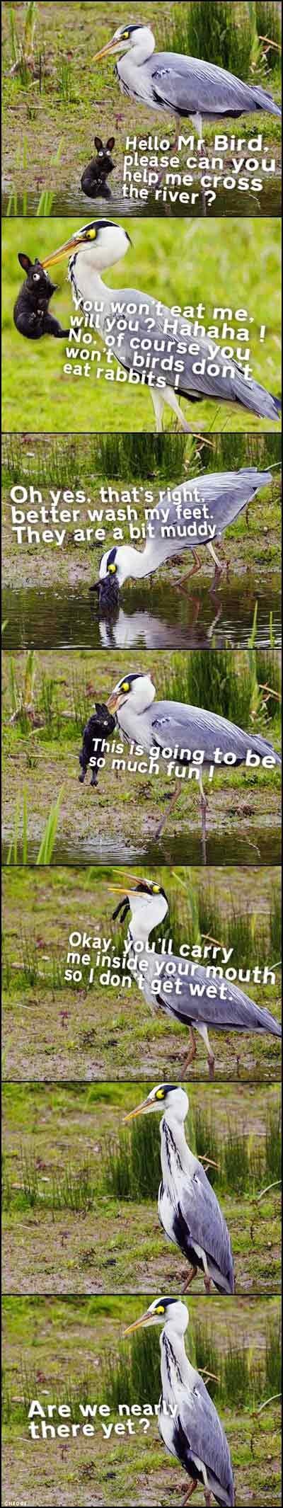 heron bunny transporter. www.lulzpitbullz.com Aerial installs peterborough Aerial installs whittlesey Aerial installs wisbech Aerial installs march Aerial insta penguins shit in my WHEELIEBIN but Anon Raped kitteh for da lulz luluQ stole Underwear sniffing