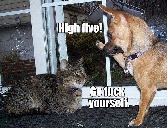 high five. . high five