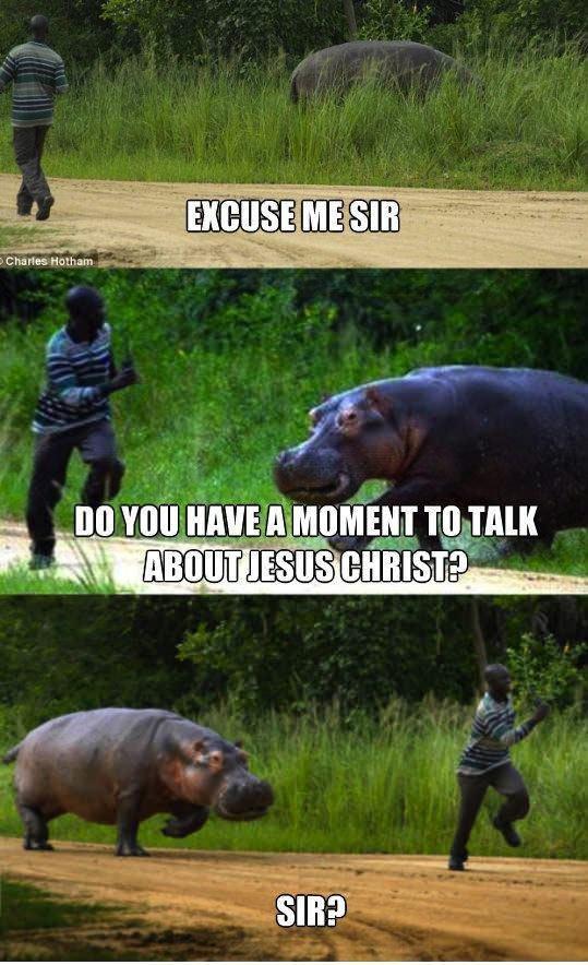 Hippo. . YO ll-% walk iii Hippo YO ll-% walk iii