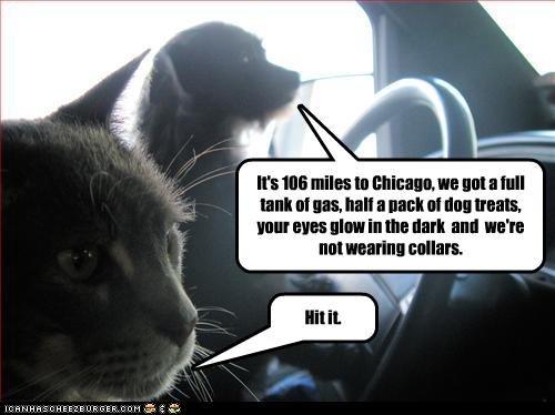 "hit it.. . s HIE Eal"" IE In -: um I III III]! III In Tlr. I nan: III in wall. collars. irst, E PC,. Illinois Nazis I hate Illinois Nazis. cat Dog Road trip"