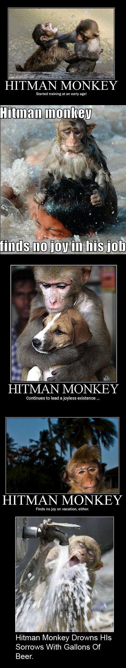 Hitman. Monkey. Hitman Monkey