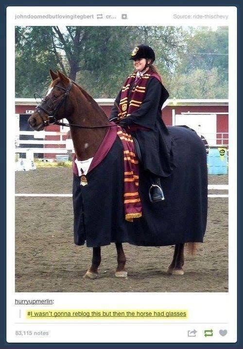 Horse Potter. . Horse Potter