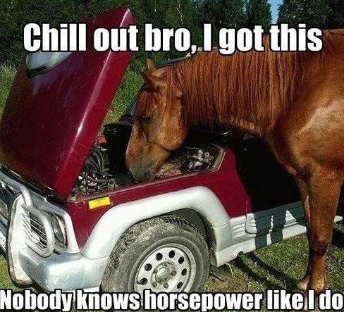 horsepower like a sarah jessica parker. . I iil! iial LI Blatt his horsepower like a sarah jessica parker I iil! iial LI Blatt his