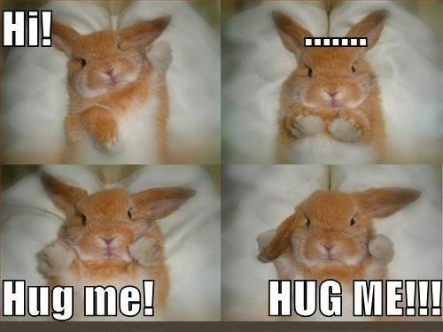 Hug me!. . bunny wanna hug