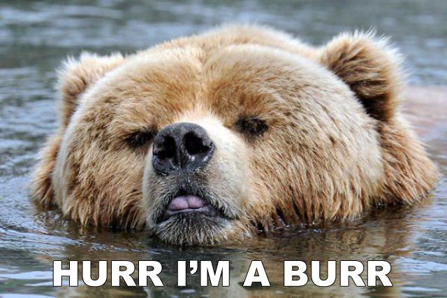 hurr i'm a burr. burr. PM A BURR - ii I Beer animal hurr DURR
