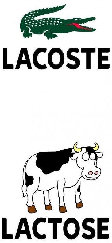 lactose. mooo. LACOSTE LACTOSE MOOO
