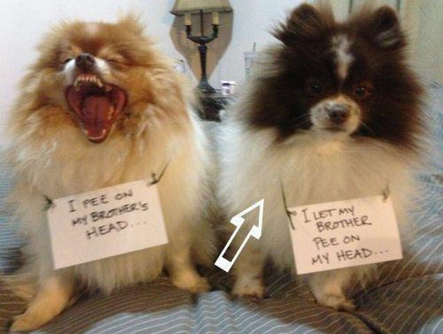 laughing dog. . laughing dog