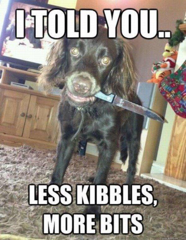 Less Kibbles. . Less Kibbles