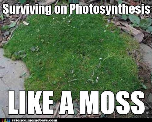 Like a Moss. . l i) tite T Like a Moss l i) tite T