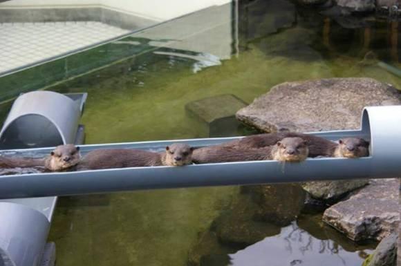 Like we give a .... Umm.. basic day .... otter like we give a fuck