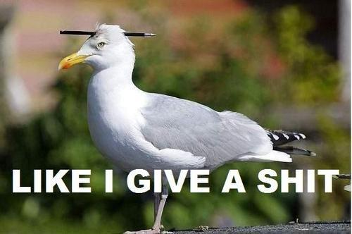 like i give a shit. . like i give a shit Badass Seagull