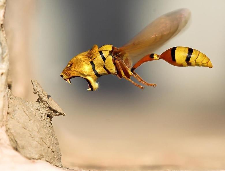 Lion Wasp, ATTACK!. Random hotties... www.classybro.com/2013/03/classy-bros-random-ho.... Lion Wasp ATTACK! Random hotties www classybro com/2013/03/classy-bros-random-ho