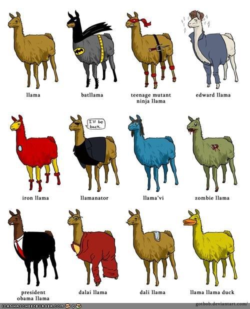 Llama's Cousins. . Llama's Cousins