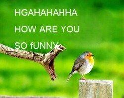 LOL Snake. . HAAHAHAH HA HOW ARE YOU LOL Snake HAAHAHAH HA HOW ARE YOU