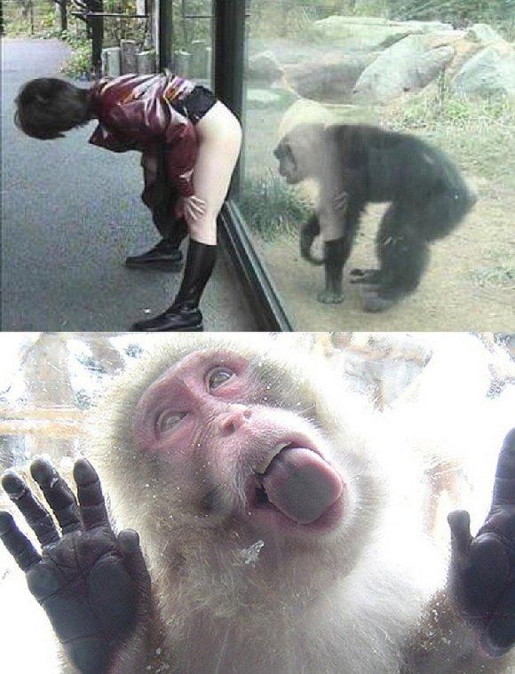 Lol monkey. . Lol monkey