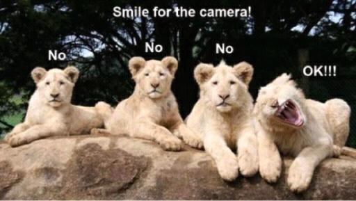 loner lion. . loner lion