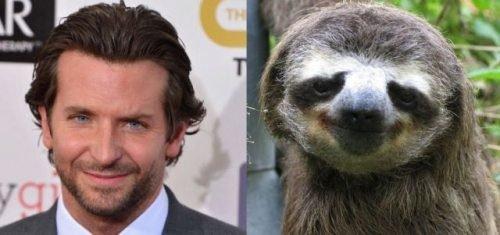 Lookin' Slothy. . Lookin' Slothy